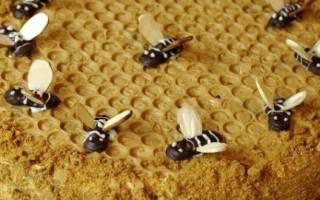 Торт медовые соты рецепт